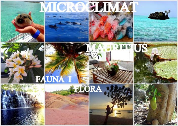 MICROCLIMAT Mauritius3